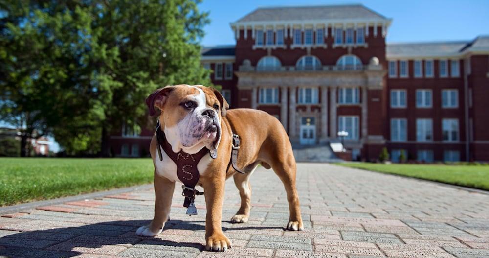 Mississippi State University Development and Alumni